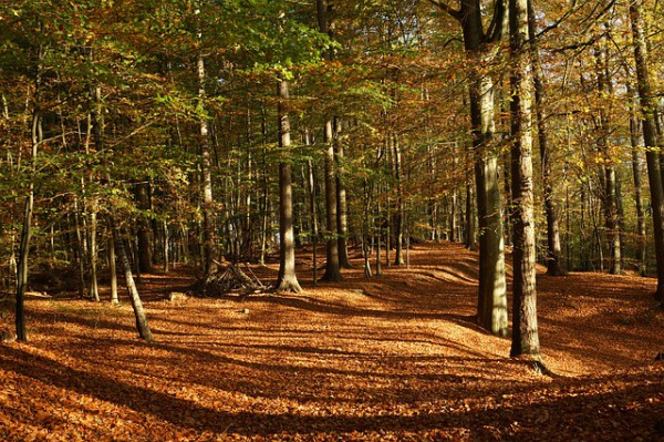 Forest-231654_640-e1426548190764