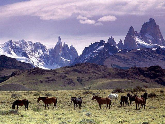 Cavalli_Al_Pascolo_Ai_Piedi_Del_Massiccio_Del_Fitz_Roy,_Patagonia
