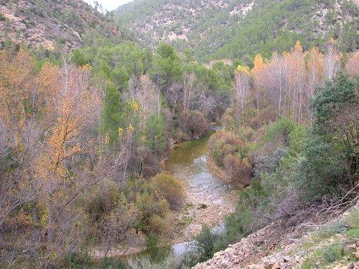 arte alta del Río Segura donde se ve el buen estado de la vegetación de ribera. / UMU