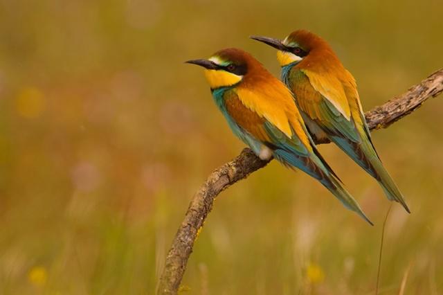 Enciclopedia de las Aves de España
