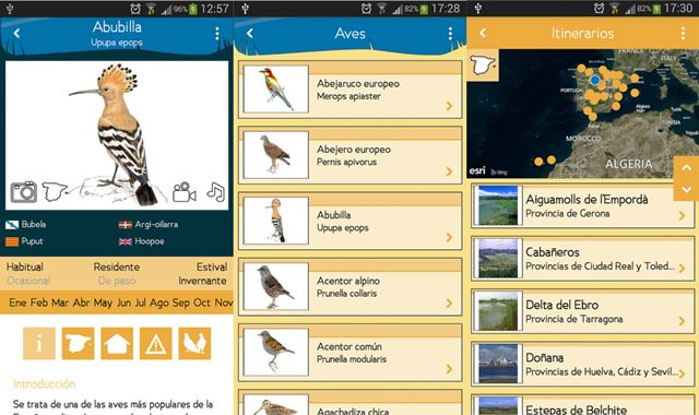 Una App Permite Identificar Más De 550 Aves Por Su Sonido Tys Magazine