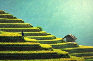 agricultura y degradación