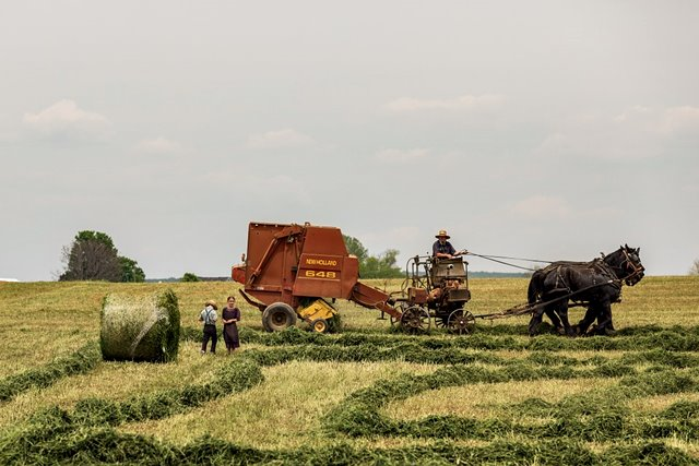 agriculture-731502_960_720