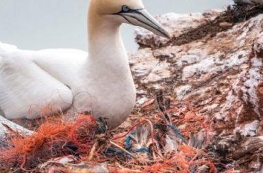 pájaro contaminación