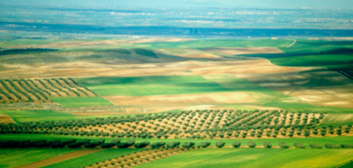 cultivos para la mejora de suelos