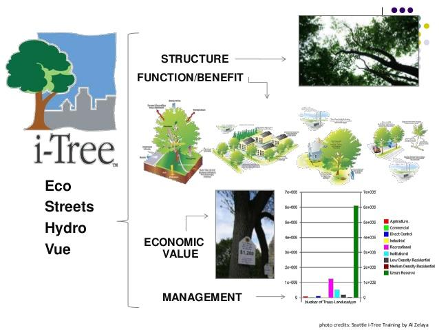 i-Tree software forestal para la ciudades (gratuito) * TYS Magazine