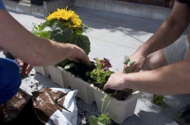 jardinería de guerrilla