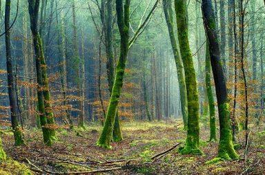 El estado de los bosques del mundo 2020
