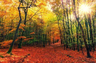 nuevos bosques