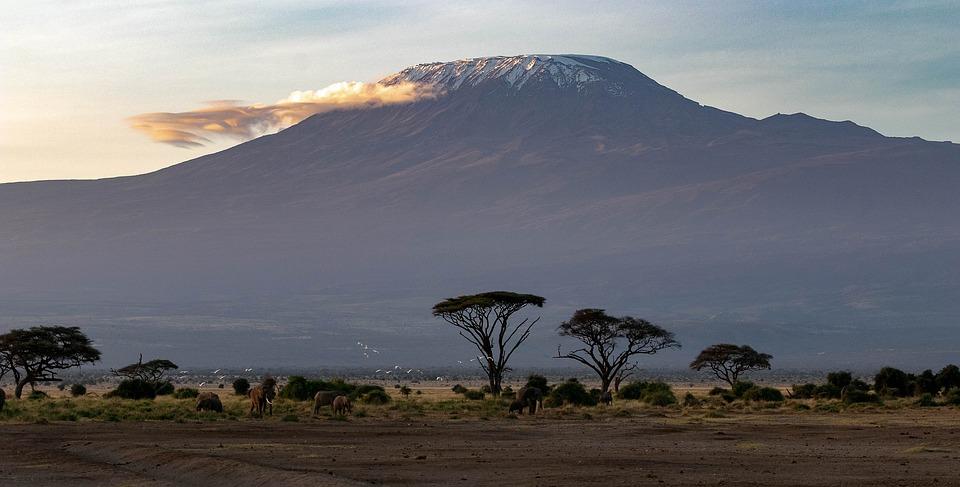 No todas las plantaciones masivas mitigan el cambio climático