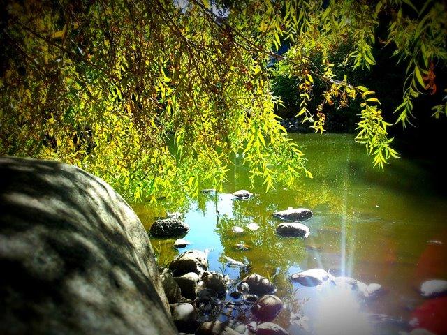 pond-400826_960_720