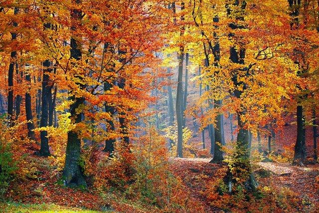 woods-1072819_960_720